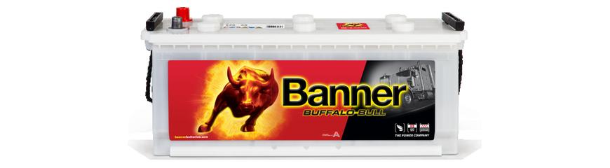 Buffalo Bull HD