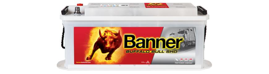 Buffalo Bull SHD